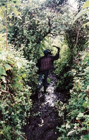 Photos of Rwanda and Rwanda Mountain Gorillas